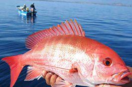 """Câu được cá """"khủng"""" dài 1 mét, nặng 22kg và hành động bất ngờ"""